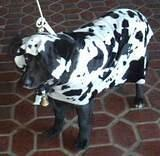 Cow Dog - Mooo... Halloween Party at the 79th Street Boat Basin, 2001.