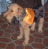 Dapper Pooch - Halloween Party at the 79th Street Boat Basin, 2001.