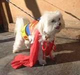 Super Pup - Halloween Party at the 79th Street Boat Basin, 2001.