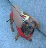 Weiner Dog with Mustard - Halloween Party at the 79th Street Boat Basin, 2001.